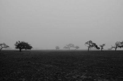 Fekete föld